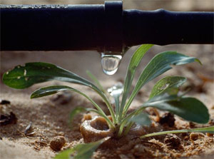 our team can install professional drip irrigation systems